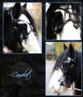 Camelot by the-warhorse