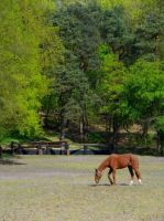 Horse in the grass field by EmiiLly