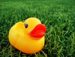 Duck by AbdoHad