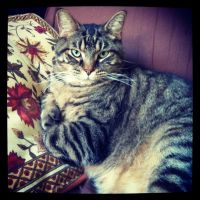 My Kitty, Eddie, and his ''lazy day''. :) by JosieKITTEH