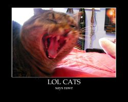 Rawr, lol cats by OblivionMaster