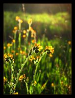 Twirly Wildflowers by krissy