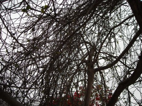 More tangles branches by LaerthesBlack