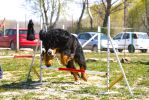 Agility FurMonster by lumba18
