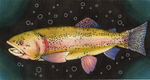 Rainbow Trout by sharkdiver131