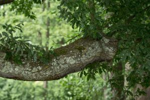 tree trunk 07 by NellyGraceNG