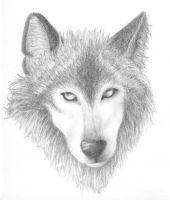 """Wolf- """"I Dare You"""" by arwenpotter"""