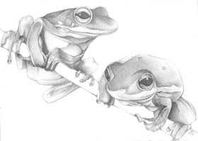 Frogs +Pencil+ by JLGribble