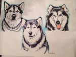 Portrait Commission - Malamutes by everythingerika