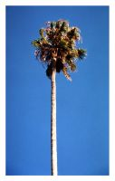 Una palmera mas by hypostatic