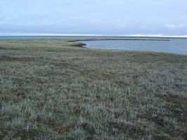 Tundra Curve 1 by Arctic-Stock