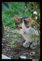CAT_10 by mufash