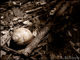 Snail shell by jKeeO