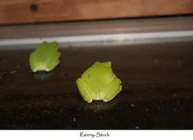 Frogs- stock- 2 by Rainny-Stock