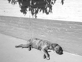 Lazy Mexican Dog by Superbiaa