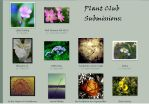 Club submissions: September by plant-club