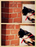 .cat. by IntoTheYellow