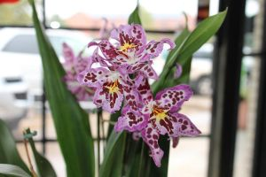 Orchids by Zyanith