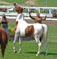Halter Horse 8 by shi-stock