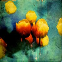 Tulips07 by horstdesign