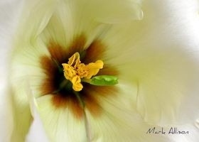 Fragility by Mark-Allison