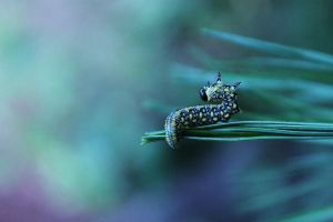 Pine Caterpillar 3 by smiley--me