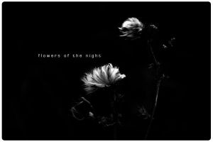 Flowers of the night by MagicalTears
