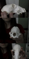 Unknown Skull by xDoglate