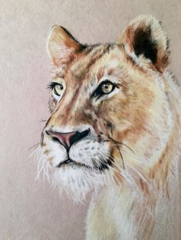 Lioness - WIP by mslaurnq