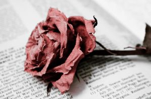 Withered Love by WisteriaPhotography