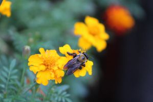 Busy Bee by Alyx-MusicalNovice