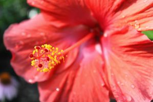 The Flowers Fingers by Baron-Von-Coeus