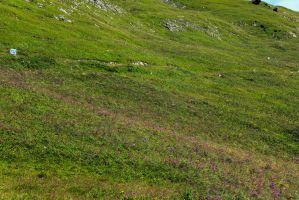 meadow 10 by Pagan-Stock