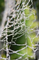 Water on the web 01 by 88-Lawstock