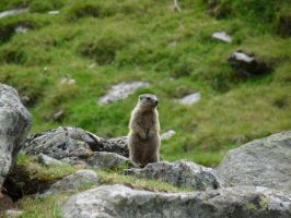 Is it a marmot? by Skyfights