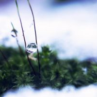 .: frozen drops :. by all17