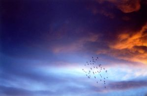 Pigeons in the sky by Korpsus
