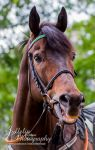 Horse Racing 636 by JullelinPhotography
