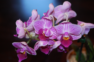 Orchid ... by time-warrior