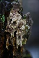 Skull of a tree by organicvision