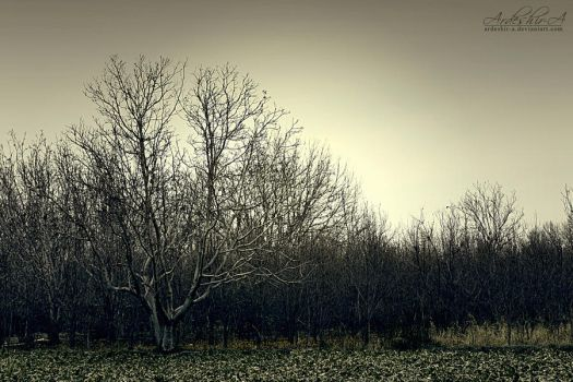 Dark Woods by ArDesHIr-a
