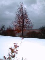 Tree with first snow by Nicollaos
