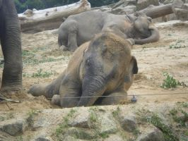 Baby elephant by Saabii