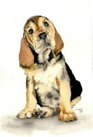 Basset Puppy by RamonaQ