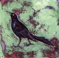 'boat-tailed grackle' by micahsherrill