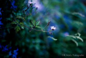Little flower by TLO-Photography