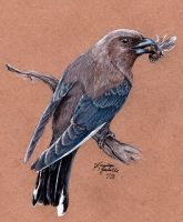 Dusky Woodswallow by KristynJanelle
