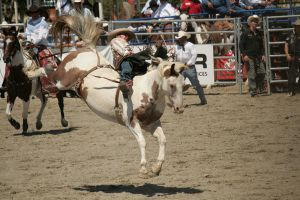 rodeo 36 by xbr0kendevotion