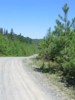 Pine on Dirt Road by Qrystal