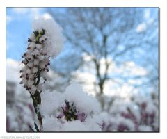 Spring Snow by infiltrator